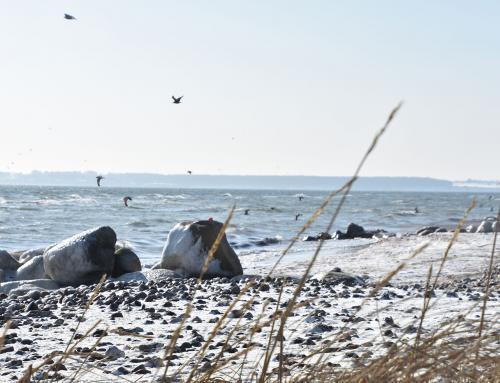 Schiferien an der Ostsee